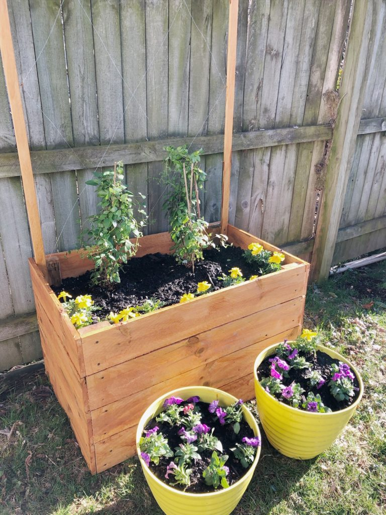 DIY Trellis Planter